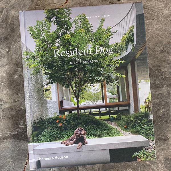 Resident_Dog LR
